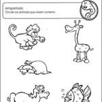 Atividades de animais Ciência