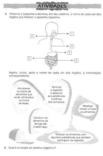 Atividades sobre os sistemas do corpo humanos
