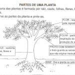 ATIVIDADES SOBRE AS PARTES DAS PLANTAS